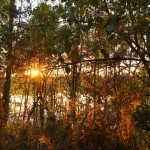 sunset through trees at crystal waters lake, bawsey, king's lynn
