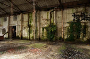 sommerfeld and thomas warehouse interior wall foliage